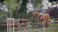 In Lucy Davis' Eyes: EPISODE 1 : Introducing Lucy & her Horses