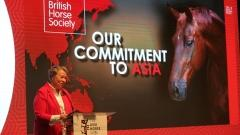 Asia Horse Week: Session 3: Education of the trainer and horse management and welfare