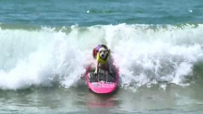 The surfing dog!